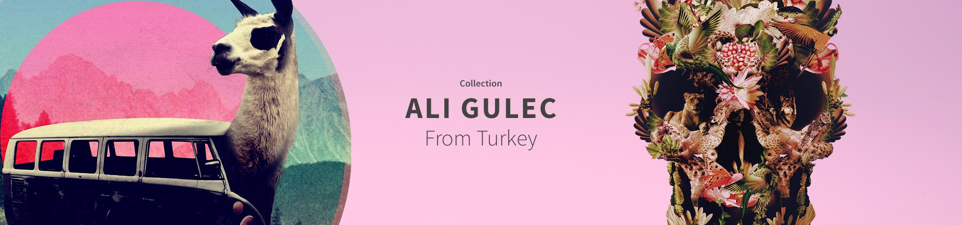 Collection Ali Gulec