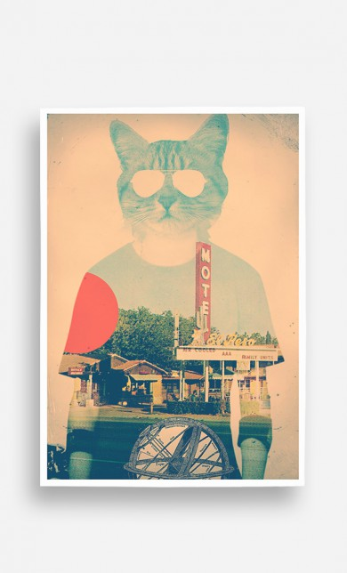 Poster Cool Cat