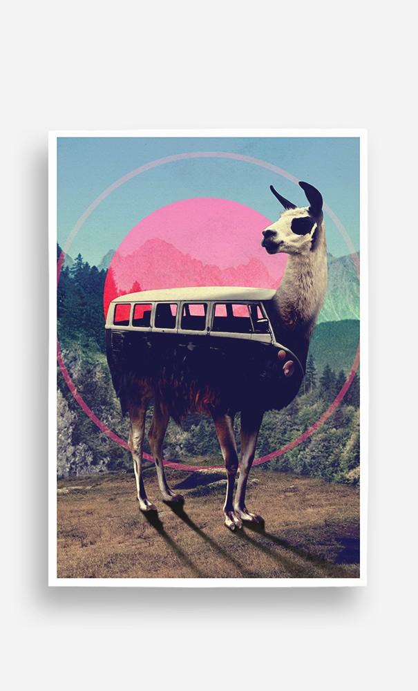 Poster Combi Llama