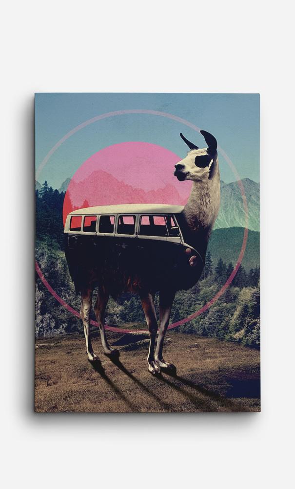 Toile Combi Llama